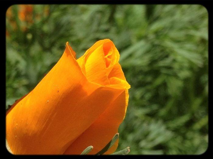 Cerrada Abierta #flower #flores #jardín #sinfiltros