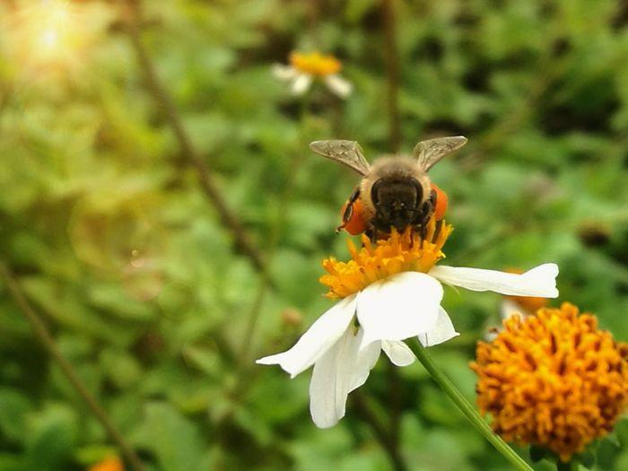 Beautiful Nature Green Natural Flawer🌸 Bee