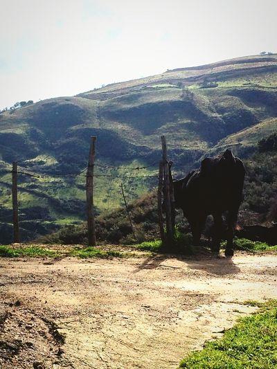 Hello World Sicily Nature Animals EyeEm Nature Lover
