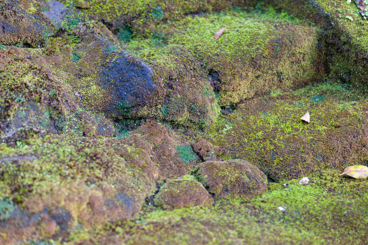 Mossy Stairs Solid Rock Nature Rock - Object No People Day Water Plant Moss Land Tranquility Growth Beauty In Nature High Angle View Outdoors Green Color Field Environment Rock Formation Temple Of Sugimoto