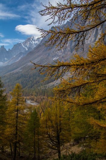 refuge bonatti,courmayeur,italy Tree Mountain Plant Beauty In Nature Environment Scenics - Nature Nature Autumn Growth Sky No People Land Landscape Day Mountain Range Outdoors Non-urban Scene Cloud - Sky Tranquil Scene Branch Change Mountain Peak Formation Coniferous Tree