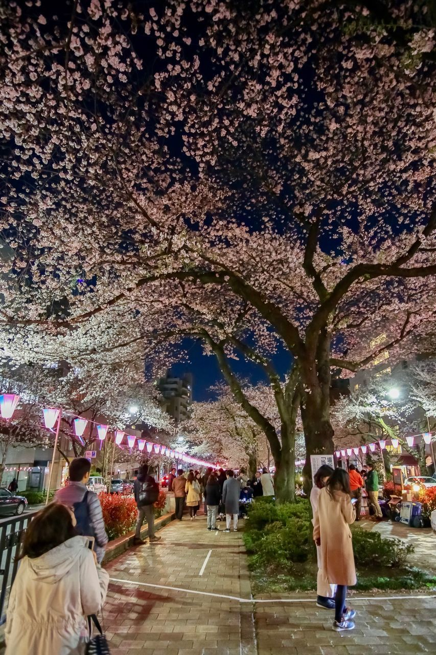 group of people, real people, women, tree, men, architecture, adult, city, crowd, large group of people, built structure, plant, walking, night, rear view, lifestyles, street, building exterior, illuminated, outdoors, cherry blossom, cherry tree
