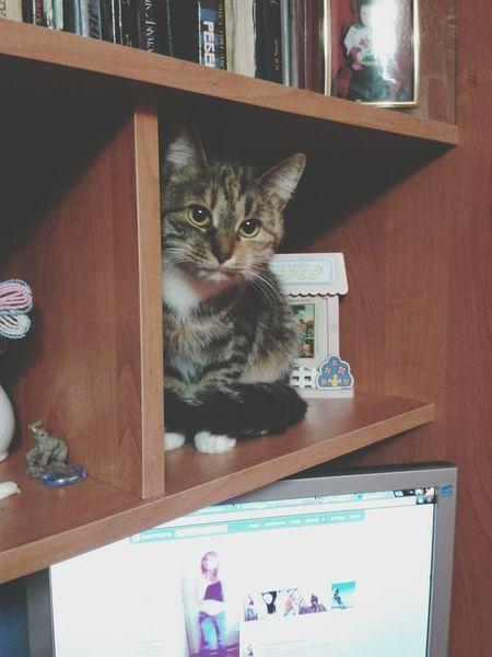 Cat Catcatcat Lovely :)