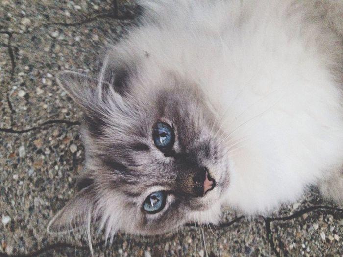 Neighborhood cat.