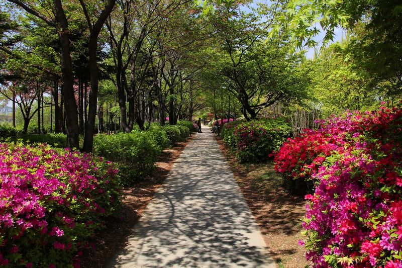 Flower Tree Footpath Nature Flowerbed Beauty In Nature Growth Springtime The Way Forward Plant Summer Outdoors Park - Man Made Space Green Color Travel Destinations No People Scenics Day Landscape