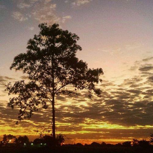 Tangará da Serra-MT Foto: @lu_poiani ___________________________ Tangaradaserra MatoGrosso_Brasil Matogrosso CentroOeste Bresil  Brasil Brazilien Brazil Southamerica World Nature BrasilSensacional IloveBrazil VisitBrasil Travel VejaMatoGrosso MtcomVc Magnifique