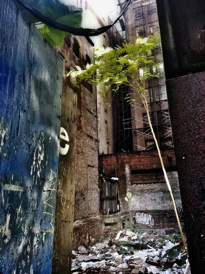 a tree grows in Brooklyn Urban Landscape Eye4photography  Naturelovers