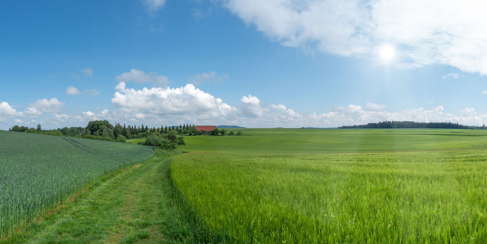 Summer landscape with green grain fields and meadow path in the sunshine Agriculture Cereal Field Nature Panorama Path Rural Scenic Summer Landscape Barley Cereal Field Cereal Plant Countryside Grain Grain Field Idyllic Landscape Large Meadow Path Rural Scene Scenery Season  Summer Sun Way