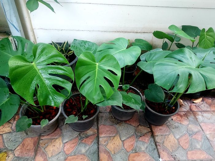 High angle view of potted plants on floor