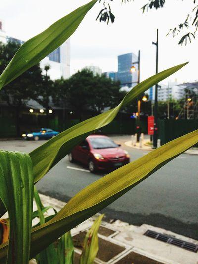 Plant Architecture City Built Structure Nature Transportation Building Exterior