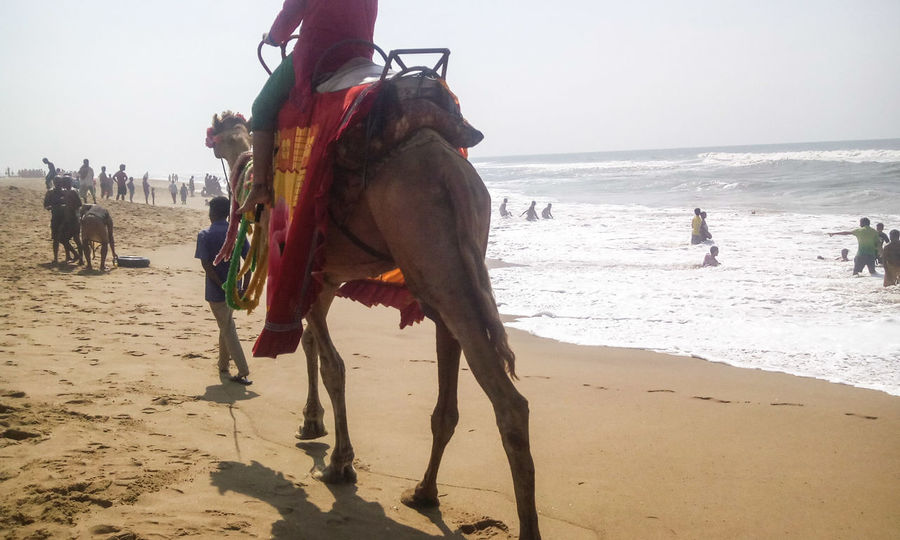 Camel Ride Camel Beach Beach Photography Seashore Amazing View Bay Of Bengal People Enjoying People Beachphotography Hidden Gems  Unidentifiable People in Puri Beach Odisha India