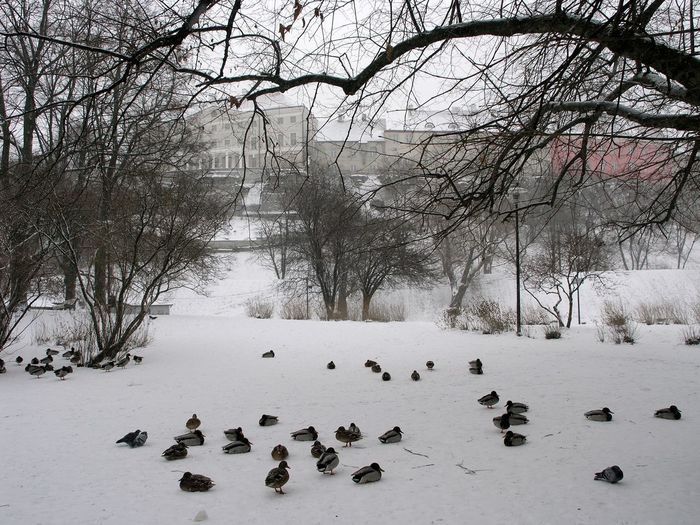 View of birds on snow covered land