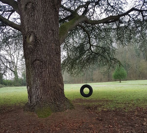 Tree No People Nature Bark Of A Tree Textured  Tyre Swing