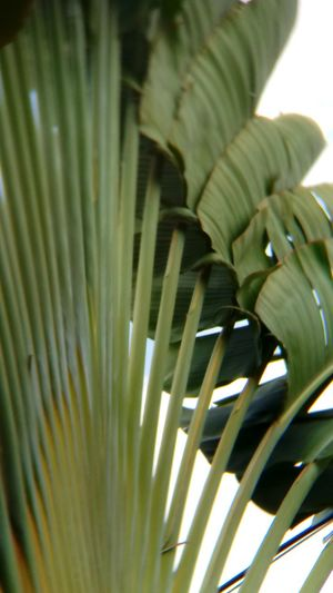 Close-up Day Freshness Green Color Growth Nature No People Outdoors Palm Tree