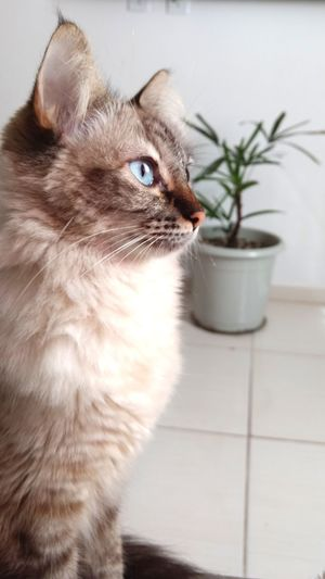 Close-up of cat looking away while at home
