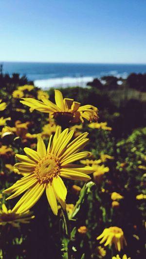 Beauty In Nature Freshness Sea Beautiful Summer ☀ First Eyeem Photo