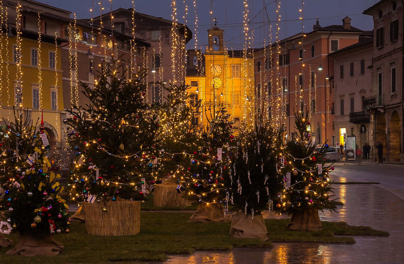 The urban wood in the main square of San Severino Marche with christmas trees Christmas Christmas Lights Holidays Winter Architecture Building Building Exterior Built Structure Celebration christmas tree City City Life City Street Decoration Decorations Dusk Illuminated Light Marche Night Ornaments San Severino Marche Seasonal Street Town