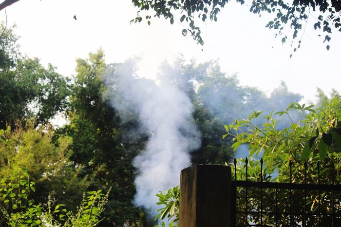 Tree Environmental Issues No People Smoke - Physical Structure Day Nature Outdoors