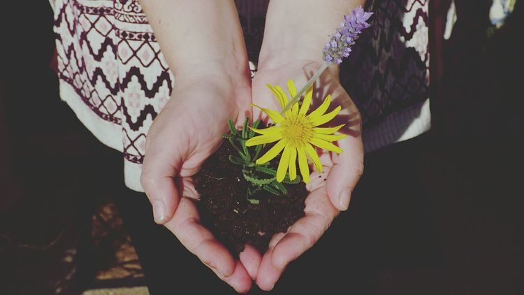 The Nature On Your Doorstep this is How Do We Build The World? Showcase March Flower On The Hand Yellow Flower Earth Hand Grabbing My Wife Hands Flowers Holding Close Up Fresh on Market April 2016 Woman Hand Woman Hands Eye4photography  Fresh On Eyeem  EyeEm Gallery Outdoors Flower Head People