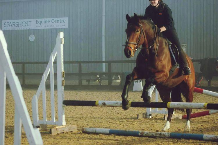 Nicely done Molly.... Fail Irish Sports Horse