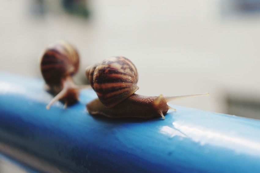 Follow me.. Snails Escargot Followme Follow Friendship Friend