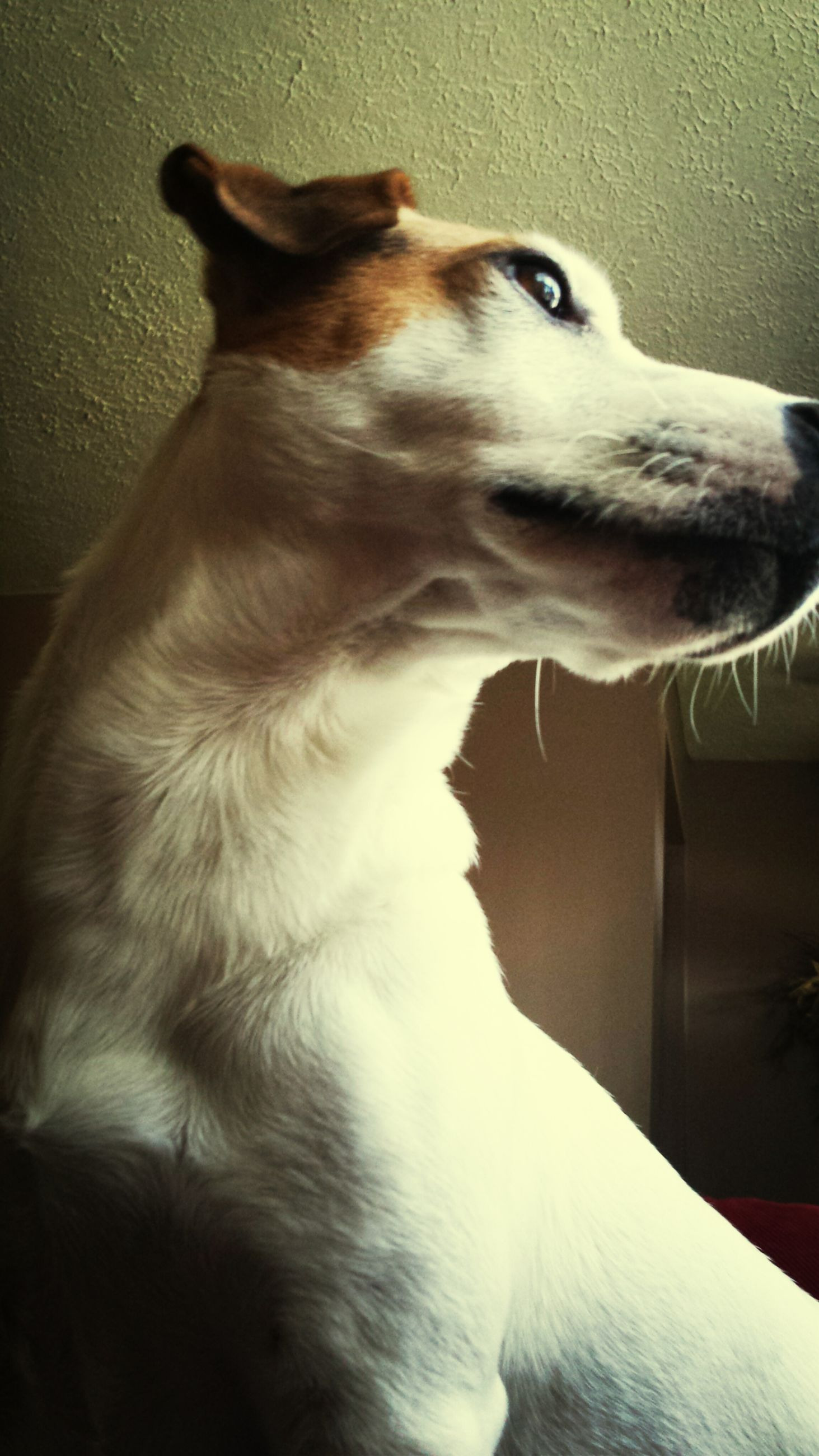 animal themes, one animal, domestic animals, mammal, pets, indoors, close-up, domestic cat, dog, side view, animal head, looking away, cat, no people, feline, white color, sunlight, animal, relaxation, sitting