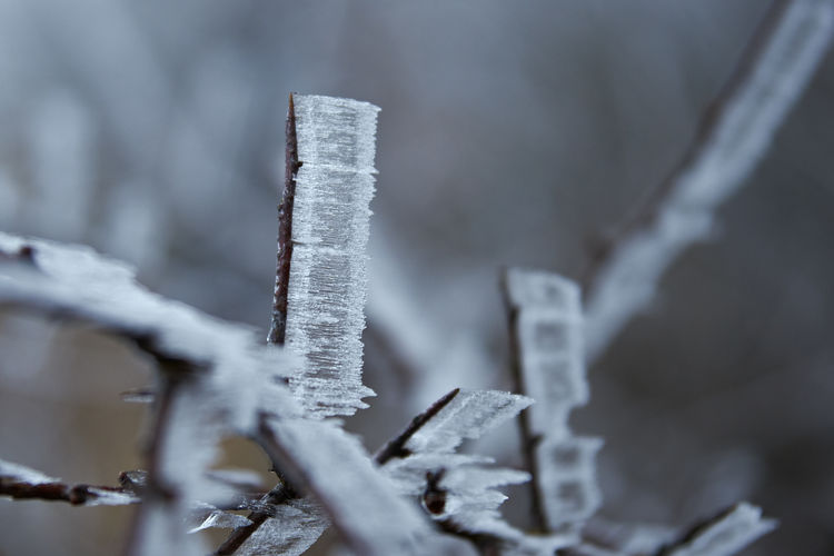 EyeEm Nature Lover Beauty In Nature Close-up Cold Temperature Day Focus On Foreground Frost Frozen Frozen Branches Ice Ice Covered  Nature No People Outdoors Weather Winter
