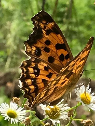 Flower Flowering Plant Beauty In Nature Animal Wildlife Plant Invertebrate Animals In The Wild Nature Butterfly - Insect Insect Flower Head