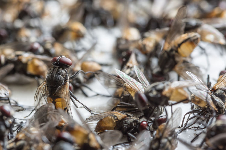 Close-up of dead flies on glue trapped