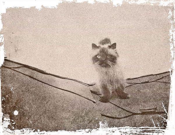... cat on roof top ... Cat