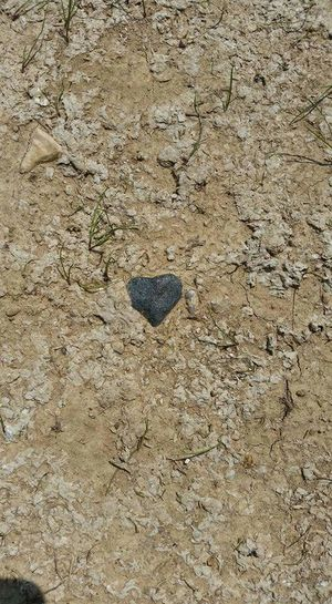 Heart Shaped Rock Heart Of Stone Dead Heart Heart In The Sand Heart Shapes In Nature Found My Heart
