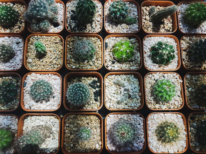 cactus & light