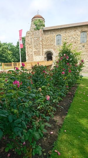 Colchester Colchester Castle Essex Summer Roses Flowers