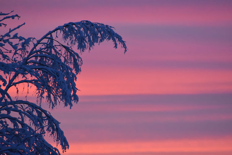 Beauty In Nature Landscape Nature No People Outdoors Purple Sky Silhouette Sky Sunset Tree