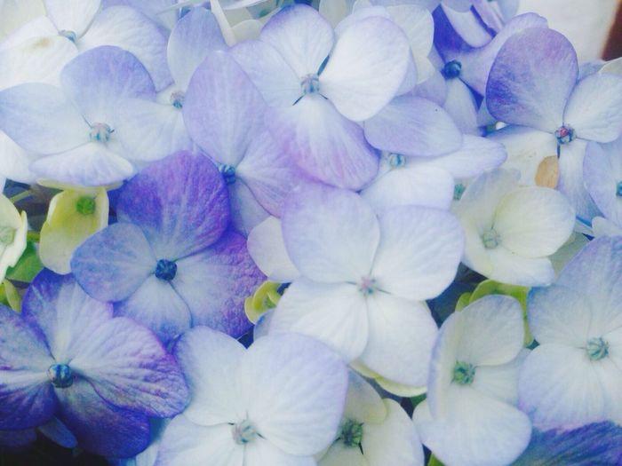 Pastel Power purple oh purple Flowers Cold Temperature
