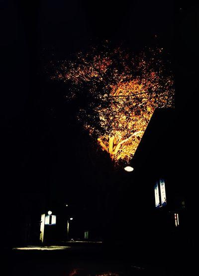 Darkness And Light Street Light Tree Art Tree Lights Evening Light Enjoying Life Evening Street Eveningwalk Evening View IPhone Photography IPhone Artistry