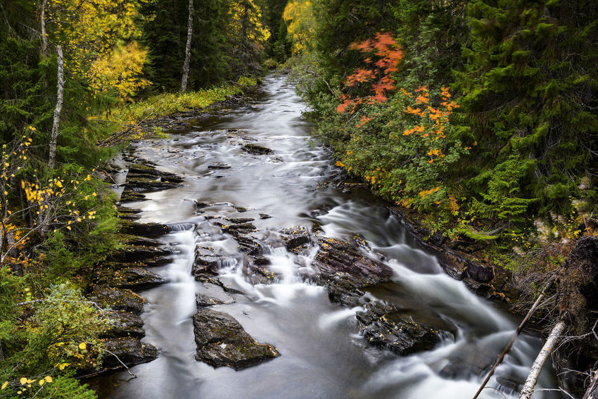 Naturephotography Landscape Sweden Forest Woods Planet Earth Tranquility Nature Photography Forest Photography Autumn Autumn colors Autumn Leaves autumn mood Autumn🍁🍁🍁 Fall Fall Beauty Fall Colors Creek Creekside Tree Water High Angle View Stream Countryside Flowing Water Stream - Flowing Water Tranquil Scene Flowing