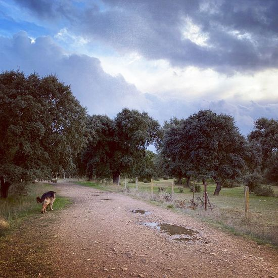 Dog on road amidst trees against sky