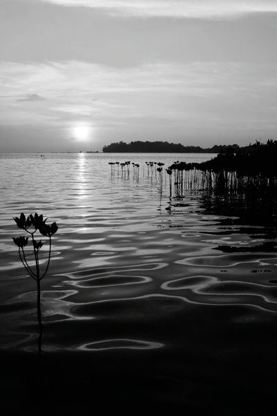 Pulau Panggang Kepulauan Seribu Travelphotography Bwphotography Monochrome Black And White HairilSaleh Photography Nature Beach Sunrise