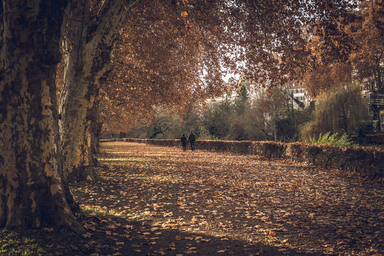 People walking on street amidst trees in forest during autumn