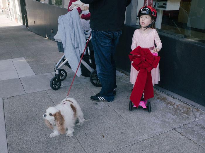 Dog Marina District San Francisco Scooter Sidewalk The Street Photographer - 2016 EyeEm Awards Young Girl