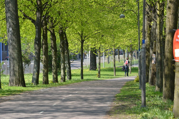 Alley Almost Empty Almost Empty R Beauty In Nature Day Full Length Green Leisure Activity Lifestyles Lush Foliage Man Walking Man Walking From Behind Men Nature One Person Only Men Outdoors People Real People Road Surrounded By Trees Tree