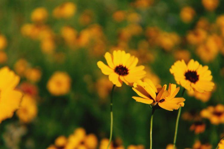 Sun fun Flower