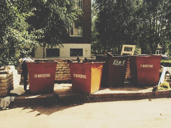 мусор птицы голуби