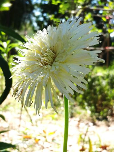 Flower Growth Nature Close-up Flower Head Beauty In Nature Plant Outdoors Freshness Fragility No People Day Beauty Frower White Flowers Wallpaper Beauty In Nature Plant Nature
