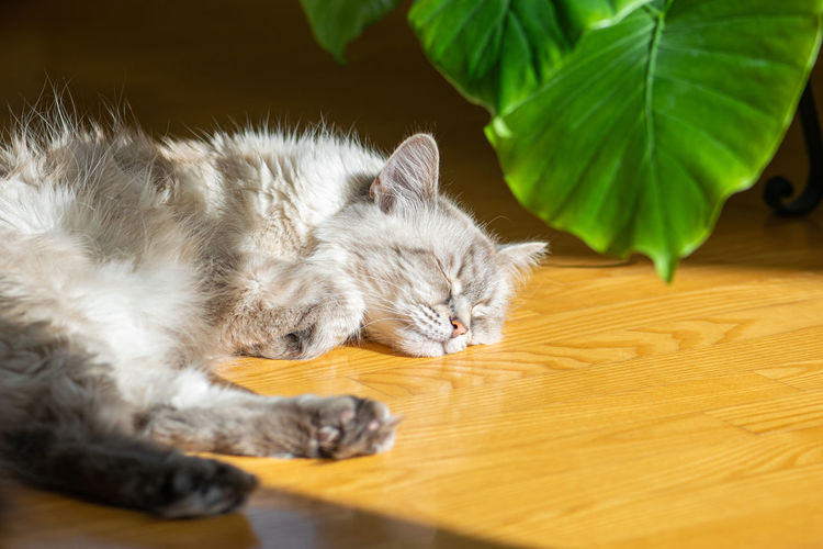 Cat sleeping on hardwood floor