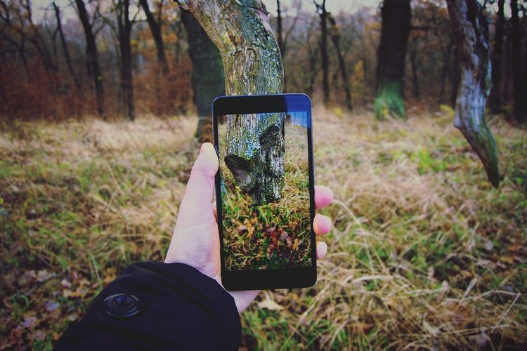 Cropped Hand Of Person Photographing Tree From Mobile Phone At Forest