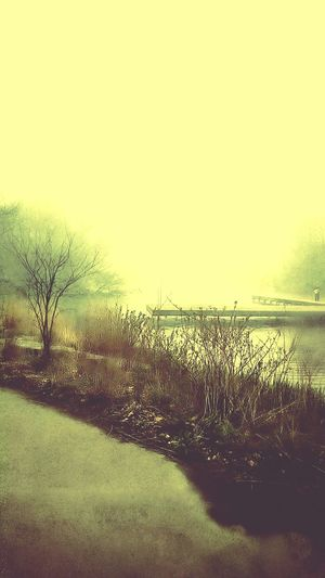 North Pond Landscape Lincoln Park Mood Foggy Morning Moodscapes Foggy Day