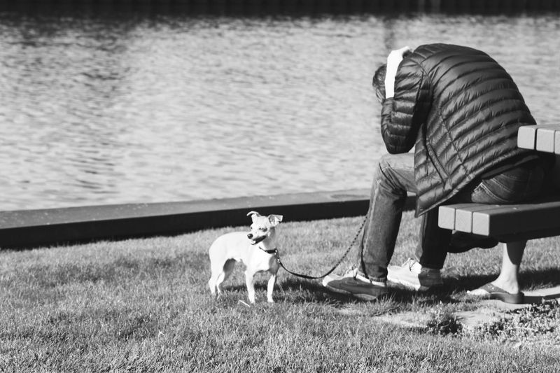 VIEW OF DOG ON LEASH NEXT TO MAN SITTING ON BENCH