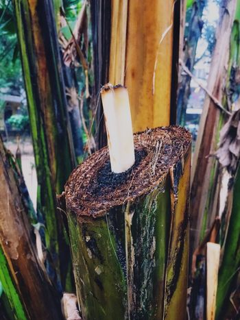 Beauty In Nature Banana Tree Banana Stem No People Wood - Material Close-up Day Nature Animals In The Wild Animal Themes Outdoors